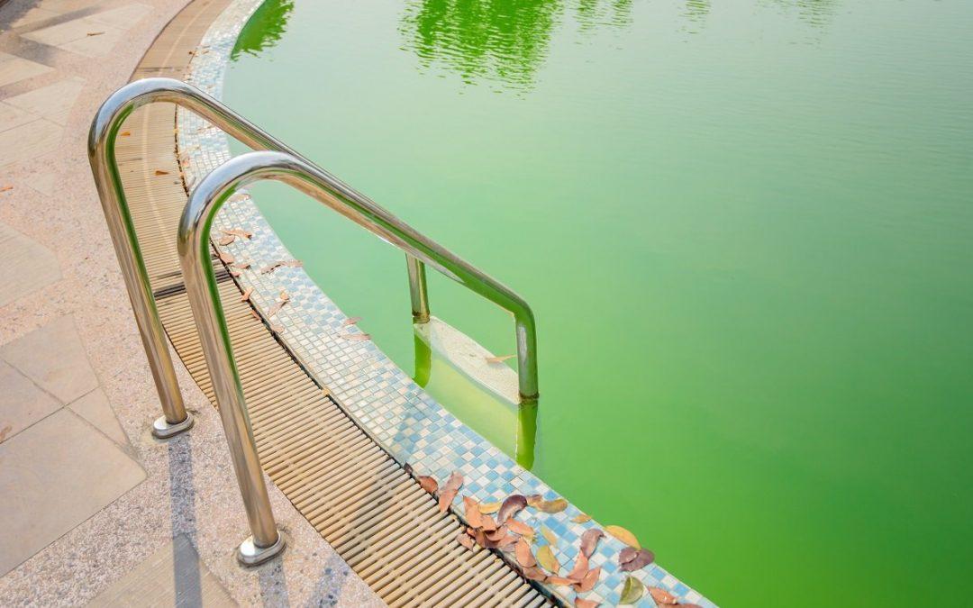 Как да се отървем от досадните водорасли в басейна?